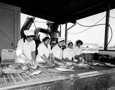 Factory work, 1977 – Pacific Islands and New Zealand – Te
